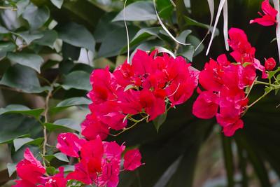Flowers IMG_7291