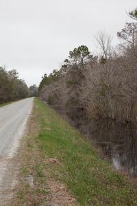 Alligator NWR IMG_0732