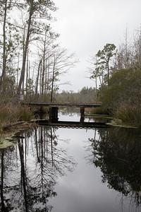 Alligator NWR IMG_0733