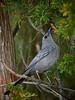Cat Bird, Ontario