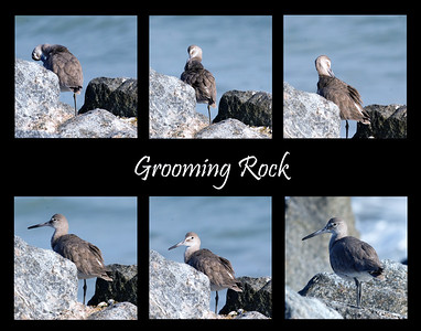 The Grooming Rock