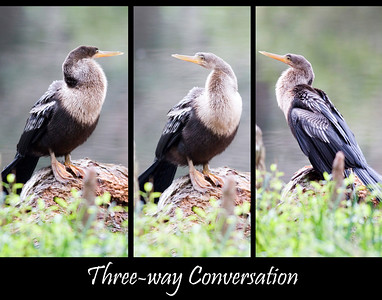 Three-way Conversation