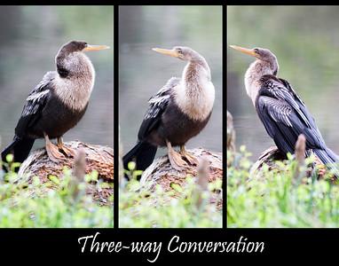 Three-way Conversation