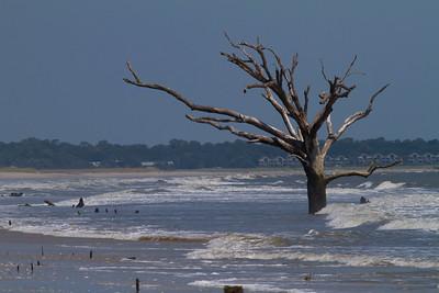 Botany Bay Tree IMG_7083