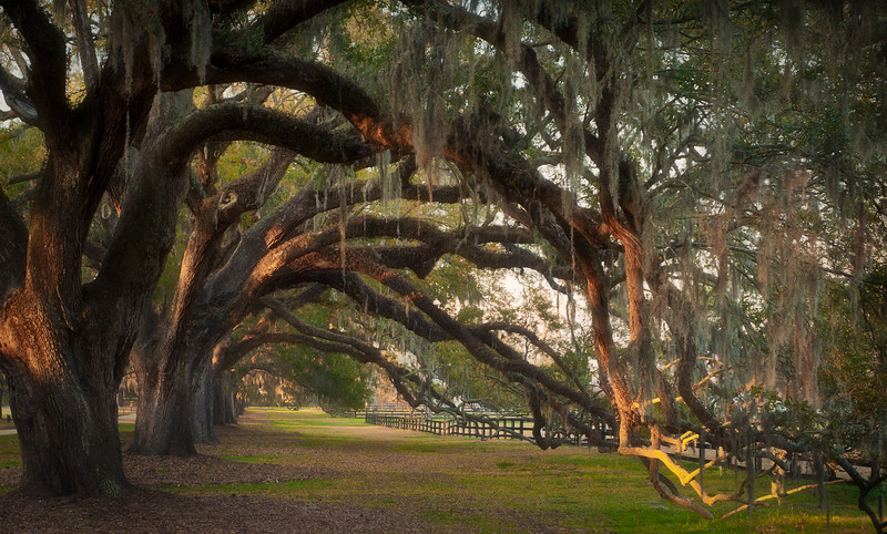 Under the Oaks