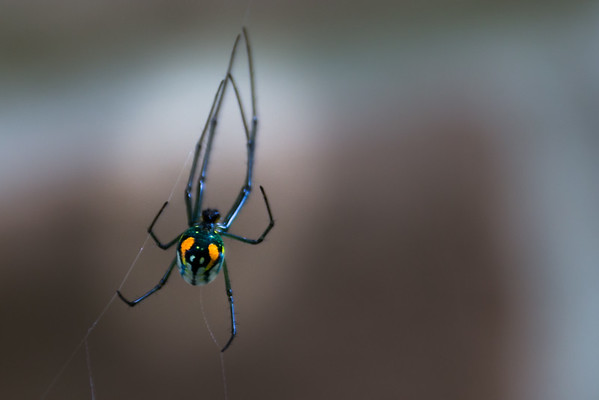 Hello Spider!