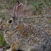 June 2nd, 2012<br /> <br /> Just a bunny!<br /> Happy Saturday!