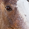 May 24th, 2012 - Kenya <br /> <br /> My sister's horse.<br /> Hope you all have a great day!