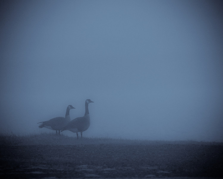 May 17th, 2011 - Goose Gloom<br /> <br /> Happy Tuesday!