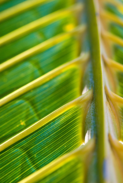 Kauai, Hawaii  September 2009