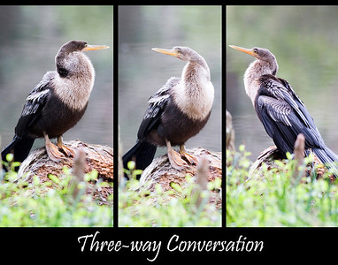 Anhengas _3-way conversation