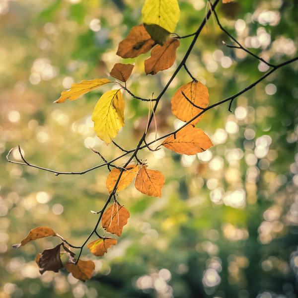 l'automne est arrivé | fall is here