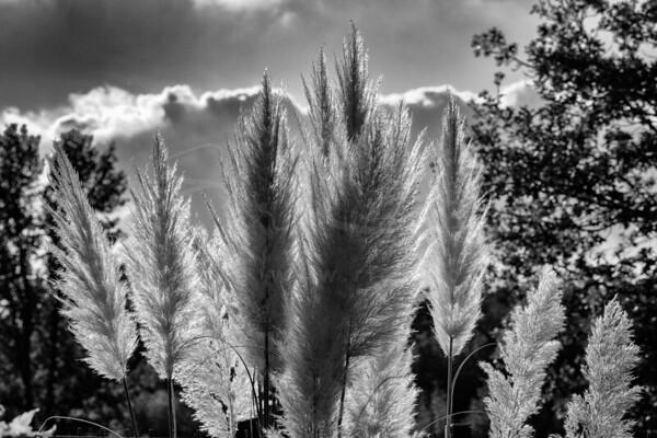 les herbes au soleil d'automne | grasses in the autumn sun