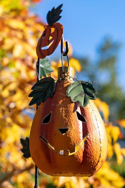 Halloween ensoleillé | sunny Halloween