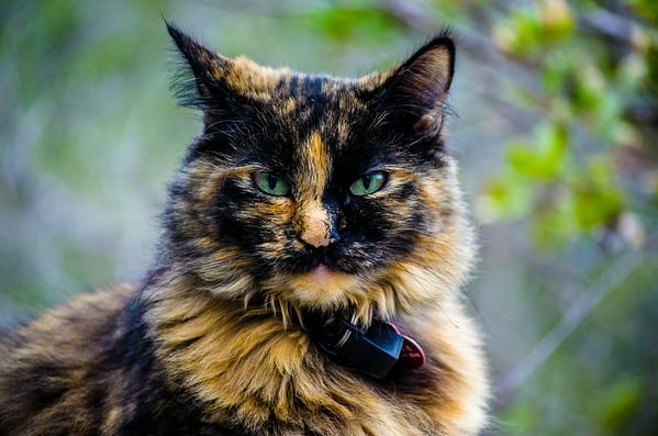Anya, the Kitty I