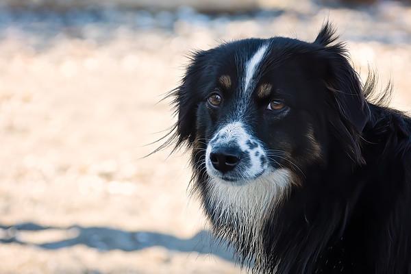 Ruby, the Wonder Dog