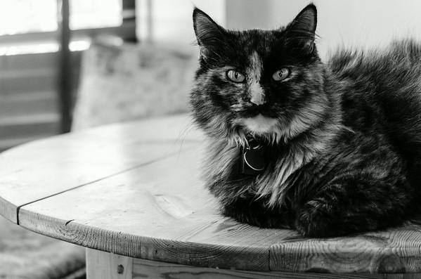 Anya, the Kitty II