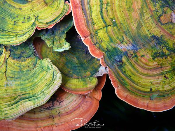 Fungi 4