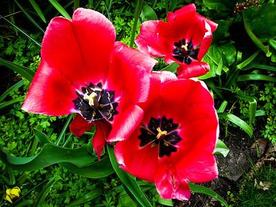 Flower Garden in Niagara Falls, Ontario, Canada May 2009