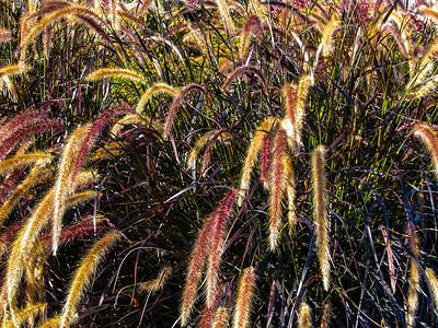 Yellowstone Grass