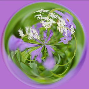 Lavender Lore