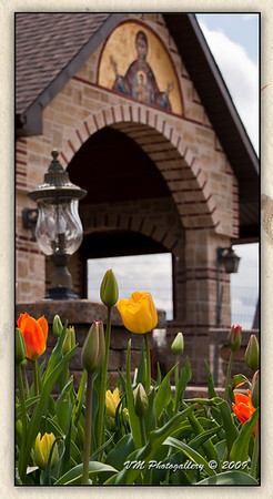 Tulips in early spring at the Greek Orthodox monastery of the Virgin Mary of Consolation in Chatham, Quebec, Canada.