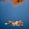 Reflections from the North Carolina sky near the Blue Ridge Parkway creates a beutiful pattern from the fallen leaves.