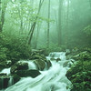 Green Mountain Creek in Fog