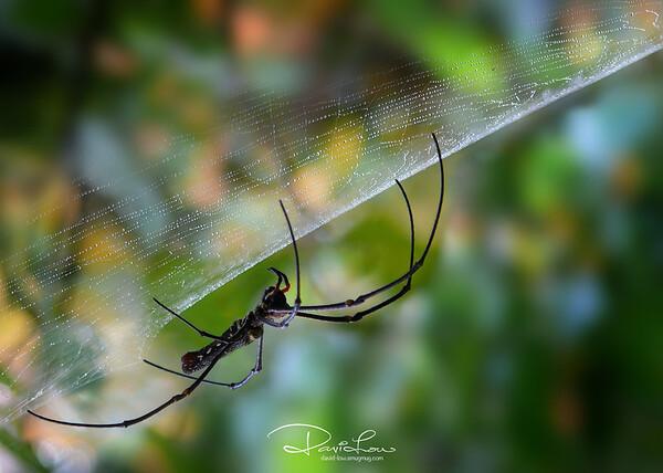 Silky web 2