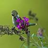 Sampling Nectar