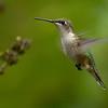 Wing blur