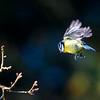 Birds © 2019 Olivier Caenen, tous droits reserves