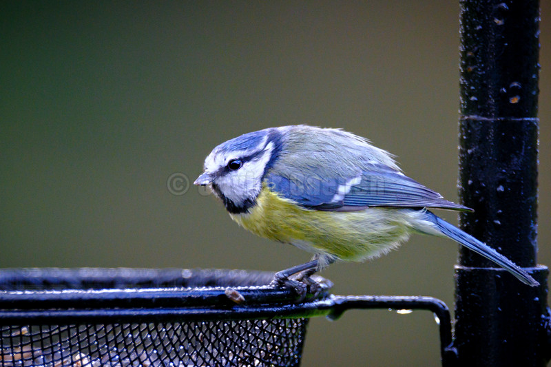 Birds of the Garden © 2019 Olivier Caenen, tous droits reserves