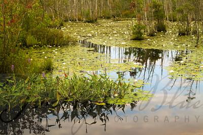 Goshen Pond Goshen Pond, Wharton State Forest