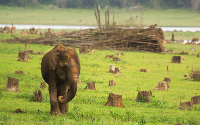 Elephants at Kabini Wildlife Reserve  This photograph shows the deforestation happening in our forests and the interplay with wildlife.