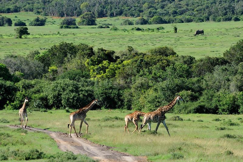 Kariega Game Reserve © 2009 Olivier Caenen, tous droits reserves