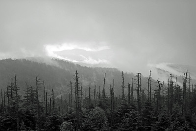 Clingman's Dome | Great Smoky Mountains, Tennessee | US - 0025
