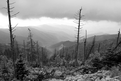 Clingman's Dome | Great Smoky Mountains, Tennessee | US - 0024