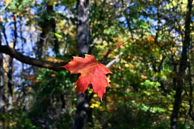 Fall | Almont, MI | US - 0072