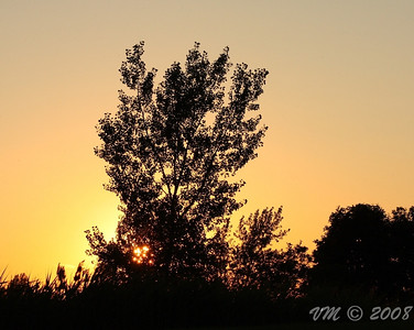 Sunset behind the lonely tree