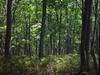 Bushkill Forest
