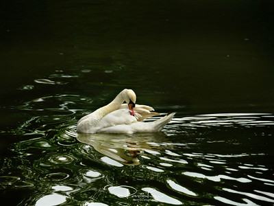 It's habitual for them to spend time to preen, surrounded by yet another glistering water full of contrast.