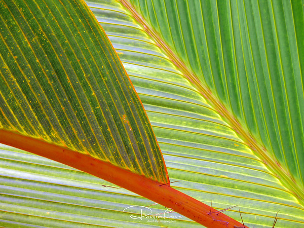 Palm in morning light