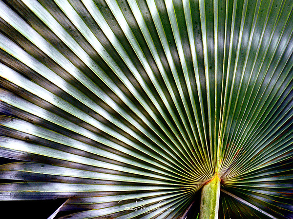 Radiating palm