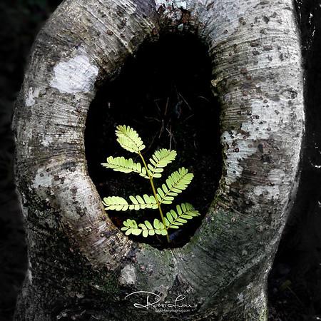 Fern nesting