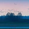 Lac du Der © 2017 Olivier Caenen, tous droits reserves