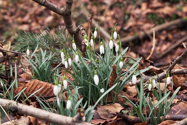 le printemps frappe à la porte | spring is knocking