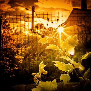 le coucher du soleil dans le feu | sunset in fire