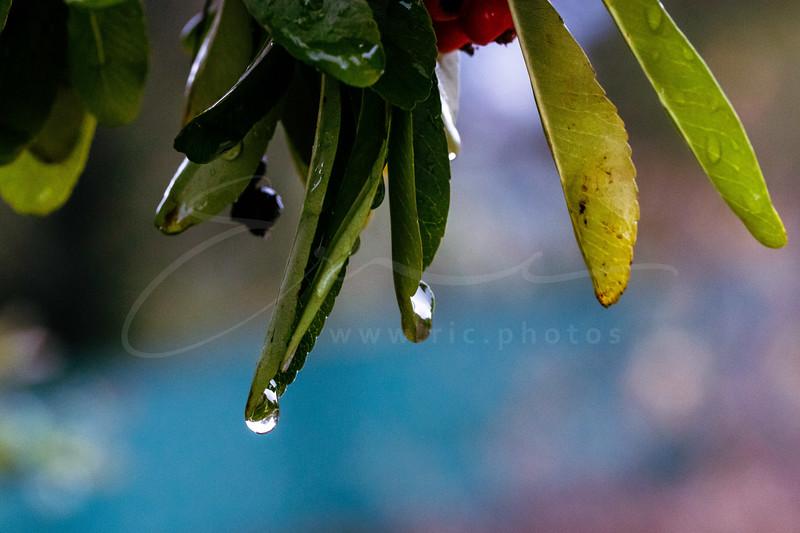 after the rain | après la pluie