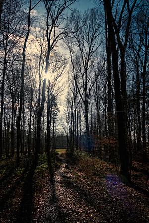 Les ombres dans la forêt | shadows in the forest